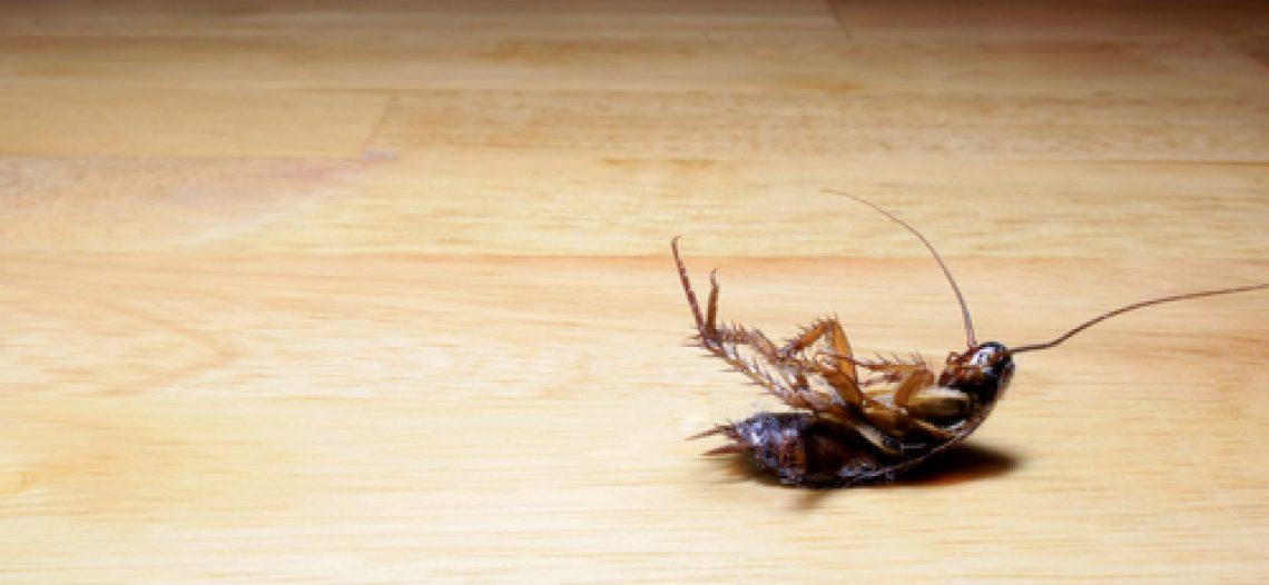 Le blatte: un problema comune in molte case